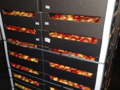 В Оренбуржье полтонны санкционных яблок переработали в биогаз