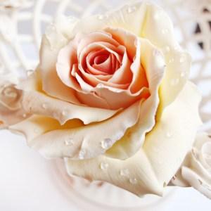 Fresh Cut Ivory Roses
