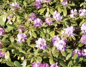Blüten dank Komposterde
