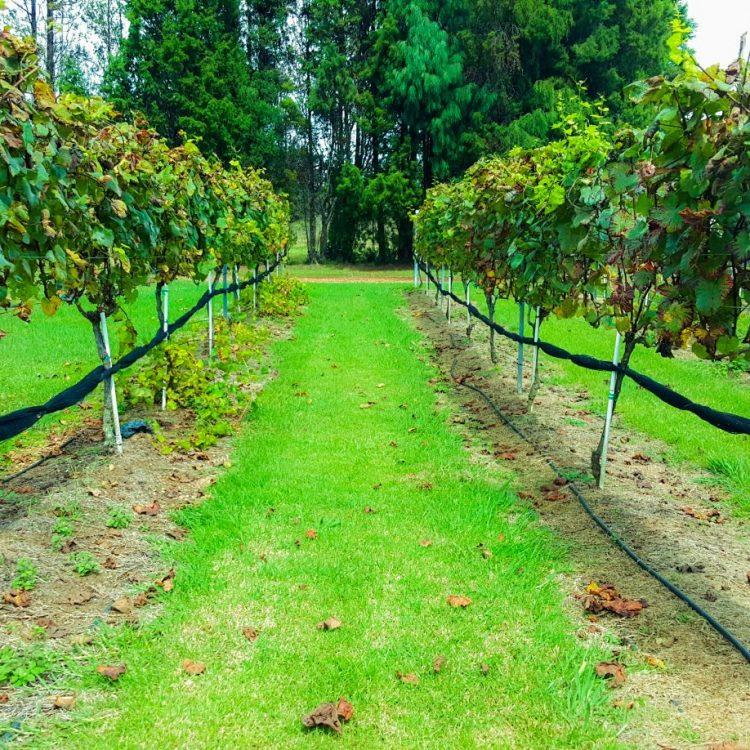 Volcano-Winery-Vineyards