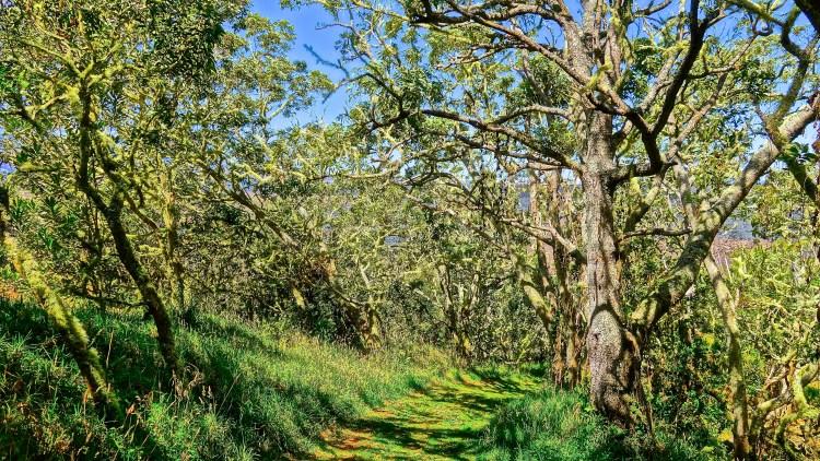 Hiking Trails / Kona / KonaNature.com / 1-844-566-2628