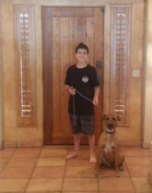 Rottweiler and Pomeranian Dog Training for Scottsdale, AZ