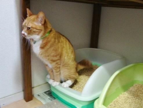 「猫 トイレ中」の画像検索結果
