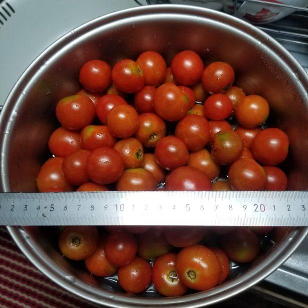 大量のプチトマト画像
