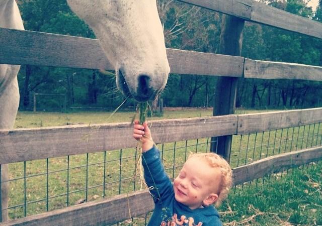 Wysoki sądzie, miał pan konia? Image