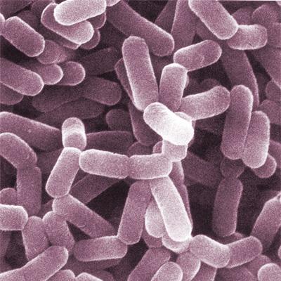 Mikroflora bakteryjna: naturalny obrońca organizmu Image