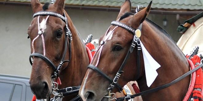 Park Tatrzański: Informacje w sprawie koni na Drodze do Morskiego Oka są nieprawdziwe