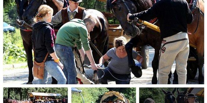 Konie wożące turystów do Morskiego Oka są zdrowe