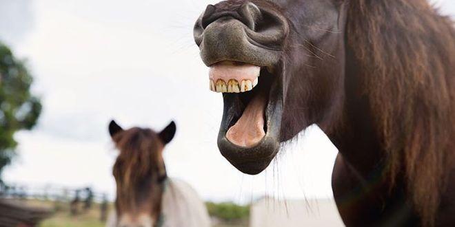 Ile koni wycofano z trasy do Morskiego Oka w 2015 roku? Co się z nimi stało? Odpowiadamy