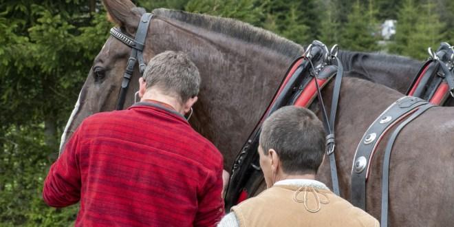 W dniach 31.05-02.06 2019r. odbyły się badania koni pracujących na trasie do Morskiego Oka