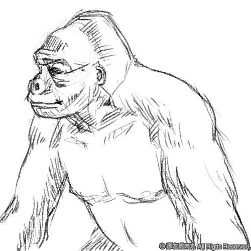 sample_gorilla