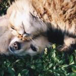 仲良し犬猫
