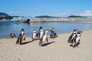 ふれあいペンギンビーチ