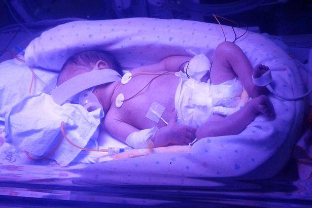 baby Faria3