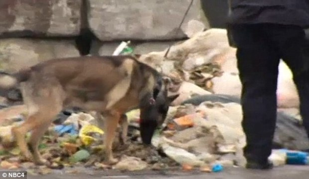 police-cadaver-dogfound-the-dismembered-leg-and-torso-in-the-trash-sorting-plant-in-hunts-point-on-tuesday