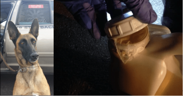 """K9 officer 'Emma' found the$2 million worth of crystal methAyala hid in """"Purple Power"""" jugs.png"""