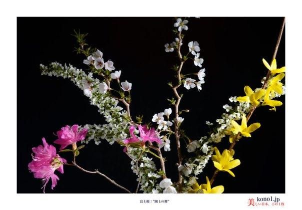 富士桜:湖上の舞