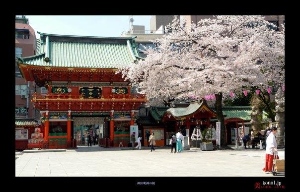神田明神の桜01