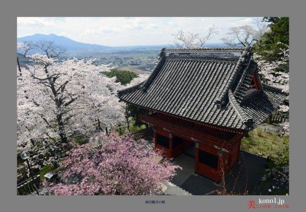 雨引観音の桜07
