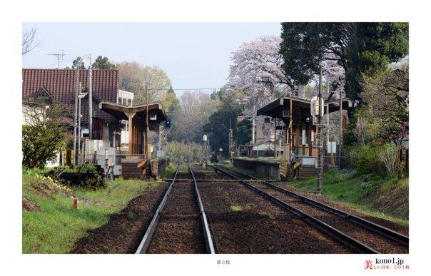 駅と桜01