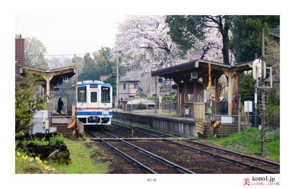 駅と桜02