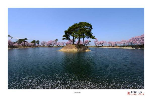 六道堤の桜01