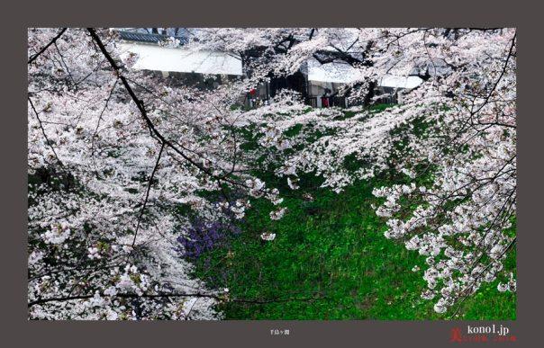千鳥が淵桜03