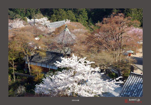 善峯寺の桜05