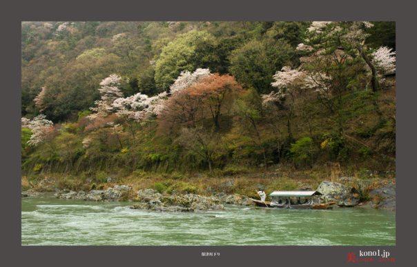 嵐山の桜05