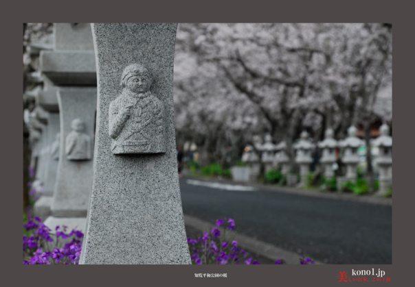 知覧平和公園の桜02