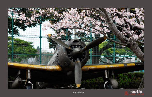知覧平和公園の桜05