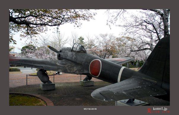 知覧平和公園の桜07