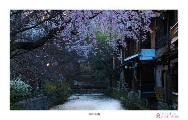 祇園白川の桜01