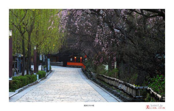 祇園白川の桜02