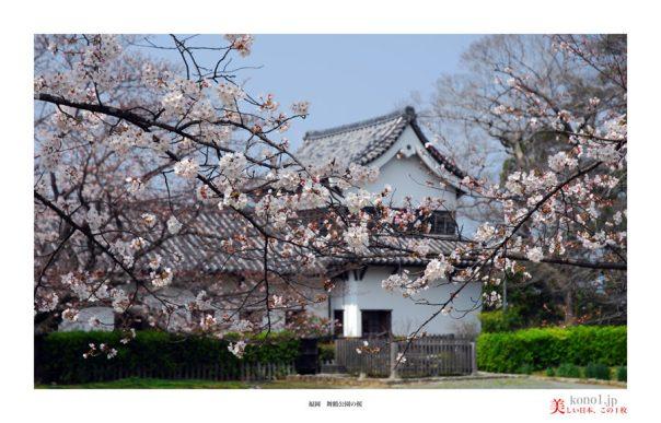 福岡舞鶴公園の桜06