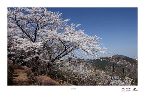 藤岡市桜山公園06