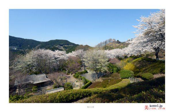 藤岡市桜山公園09