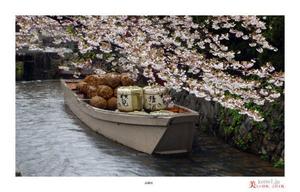 高瀬川桜01
