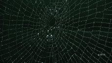 壁紙 蜘蛛のアート