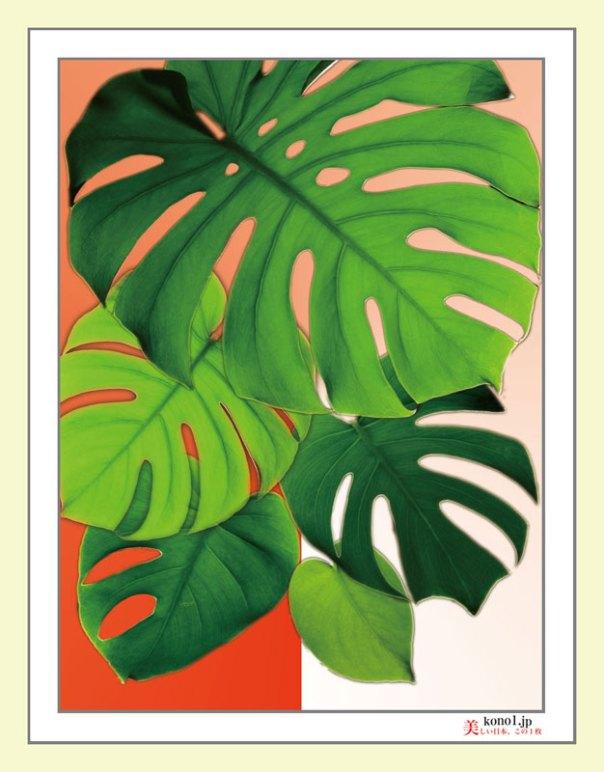 モンステラ 観葉植物 花言葉