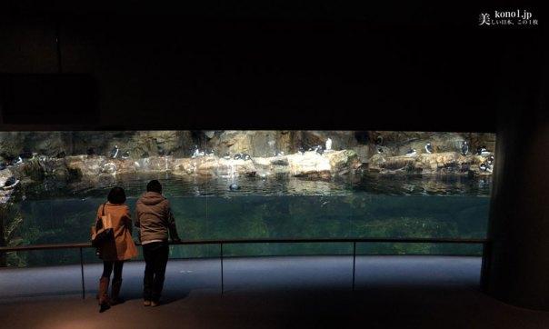 東京 葛西臨海水族園 かさいりんかい kasairinkai クロマグロ リーフィーシードラゴン