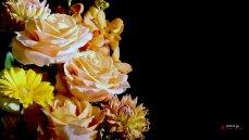 壁紙 花 バラ 背景黒