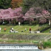 京都 賀茂川 半木の道 まからぎのみち 府立植物園 半木神社