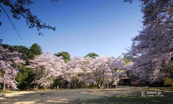 山梨県韮崎市 新府城跡 桃の花  桜 八ヶ岳