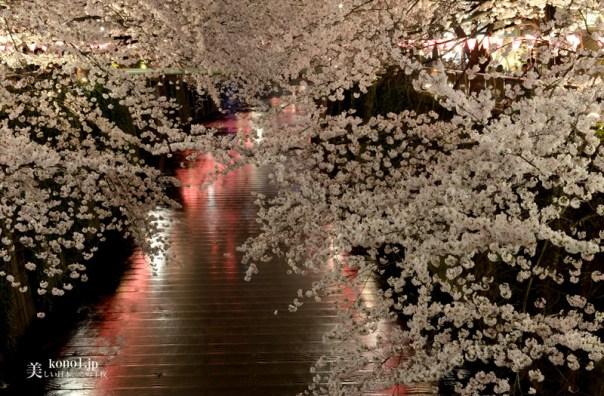 東京 目黒川 夜桜 ライトアップ 中目黒
