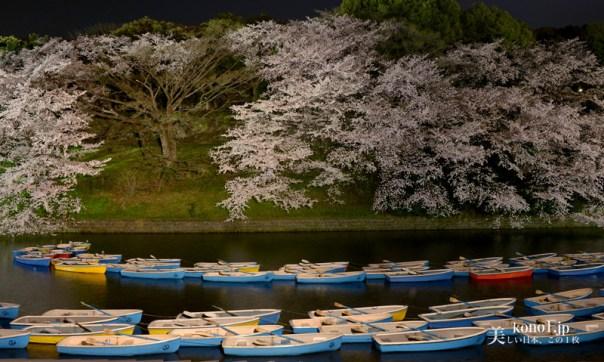 東京都千代田区 千鳥ヶ淵 桜 ライトアップ 20 東京タワー