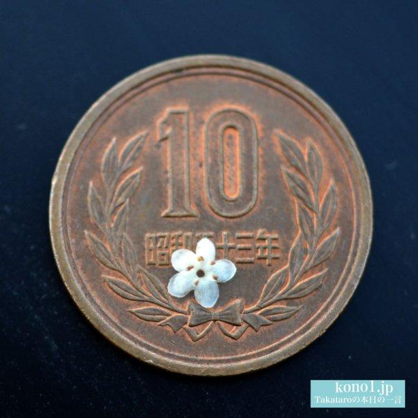 ソヨギの小さな白い花