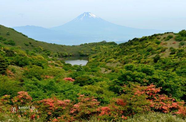 富士山 ツツジ 伊豆スカイライン 玄岳