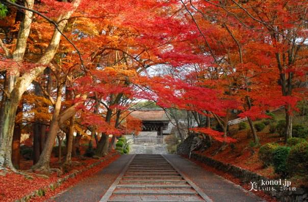 京都 毘沙門堂 紅葉 観光タクシーオススメの紅葉