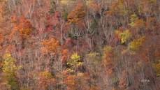 壁紙 wallpaper 紅葉 japan Autumn Color
